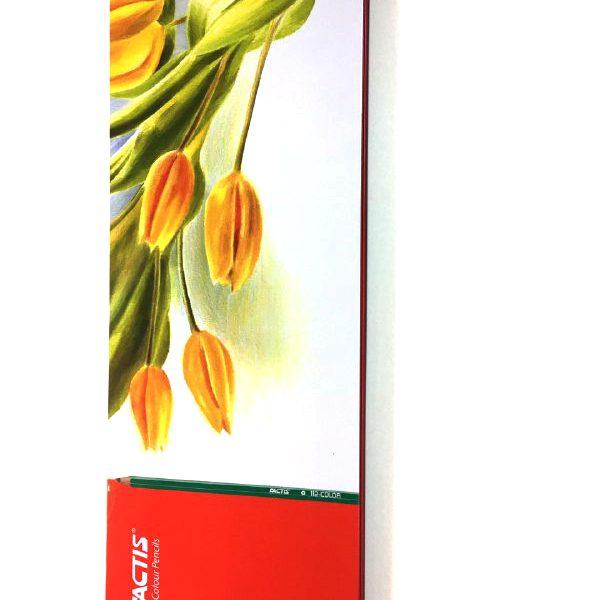 مداد رنگی 50 فلزی فکتیس