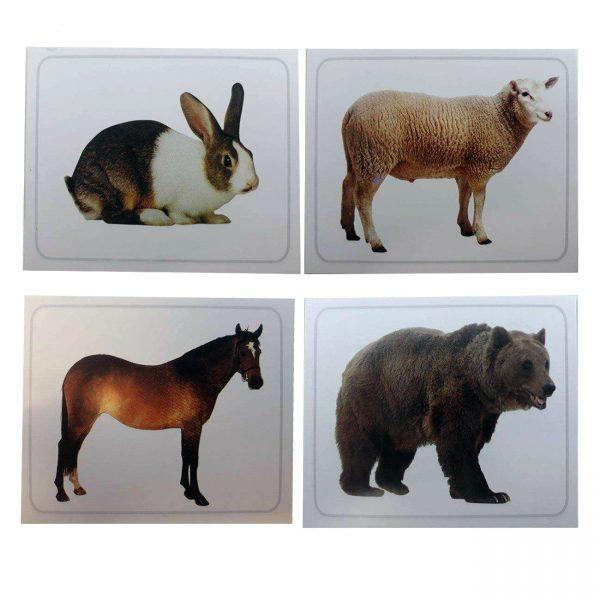 کارت دید آموز جانوران